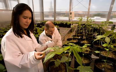 Researchers in Life Science Complex greenhouse.