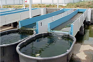 Experimental Streams at the City of Denton Wastewater Treatment Facility
